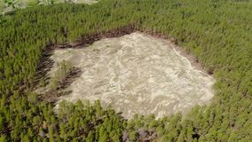 Aerial drone view of big empty hollow inside coniferous pine forest due to illegal deforestation. Climate change