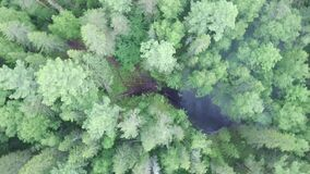 Aerial drone view of black burnt forest area with rising up white smoke, ecology and natural disaster concept. Stock