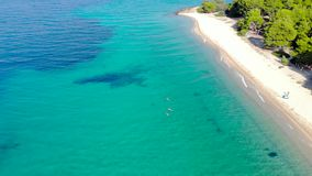 Aerial drone view of blue sea surface on sandy beach surrounded with trees. Top view of transparent turquoise ocean water surface,. Seashore, forest stock video