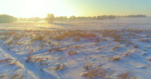 Aerial drone view of cold winter landscape with arctic field, trees covered with frost snow and morning sun rays over