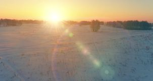 Aerial drone view of cold winter landscape with arctic field, trees covered with frost snow and morning sun rays over stock video