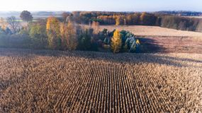 Aerial drone view of corn field after harvest and trees Stock Images