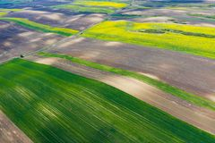 Cultivated spring fields aerial view. Aerial drone view of cultivated rapeseed plantation field. Blooming oilseed rape flowers from above as abstract natural royalty free stock images
