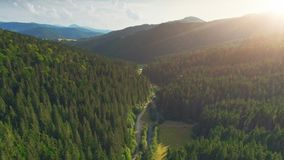 Flight over pine tree forest and country road stock video footage