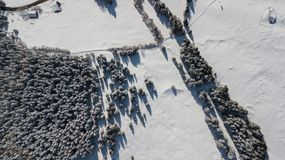 Aerial drone view of the snow-covered woods after a snowfall. Italian Alps. Winter time Royalty Free Stock Image