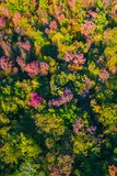 Aerial drone view of stunning colorful autumn fall forest. Drone Aerial View Concept. Royalty Free Stock Photography