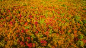 Aerial drone view of stunning colorful autumn fall forest. Drone Aerial View Concept. Royalty Free Stock Photos