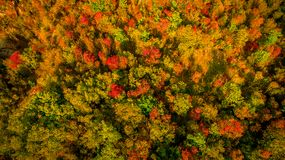 Aerial drone view of stunning colorful autumn fall forest. Drone Aerial View Concept. Stock Images