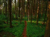 Aerial drone view of trail through the forest stock photography