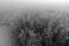 Aerial drone view with white trees royalty free stock photography