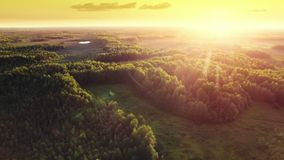 Aerial ecological forest sunset beautiful panorama shot. Ideal background for forest conservation, save biology and