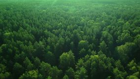 Aerial ecological green rainforests forest morning beautiful shot. Ideal background for forest conservation, save