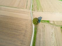 Aerial of empty fields with single tree. Aerial view of a single tree and road between brown empty fields royalty free stock photos