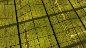 Aerial - Exterior shot of greenhouse with LED lights on for growing plants. 4K stock footage