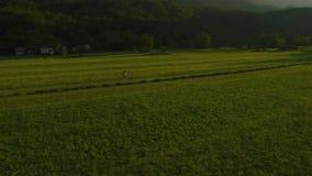 Aerial: Farmer walks through meadow stock footage