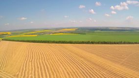 Aerial field of wheat. Aerial cleaned field of wheat stock video