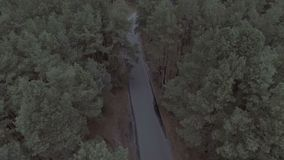 Aerial filming of a road in the forest on a summer day. Movement of the camera stock footage