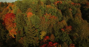 AERIAL. Flight above colorful autumn forest in Lithuania. stock video