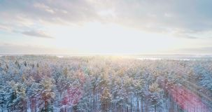 Aerial flight above winter forest on the christmas time in the northern country. The forest is covered with snow. Aerial flight above winter forest on the stock video