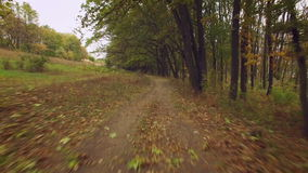 Aerial: flight close to the ground under the branches of trees. Alley in under the trees. stock footage
