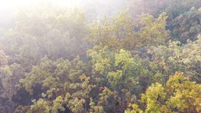 Aerial flight over autumn forest covered with fog, yellow, green and orange leaves. Aerial view of autumn forest covered with fog, plenty trees with yellow stock footage