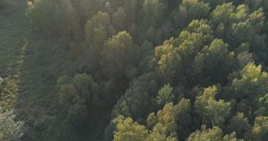 Aerial flight over autumn trees in wild park in september. Wide photo Royalty Free Stock Photography