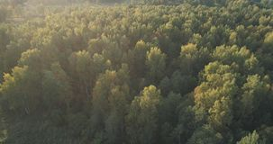 Aerial flight over autumn trees in wild park in september. Wide photo Royalty Free Stock Photos