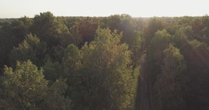 Aerial flight over autumn trees in wild park in september. Wide photo Royalty Free Stock Images