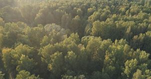 Aerial flight over autumn trees in wild park in september. Wide photo Royalty Free Stock Photo