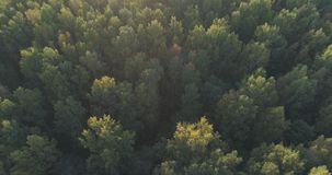 Aerial flight over autumn trees in wild park in september. Wide photo Stock Images