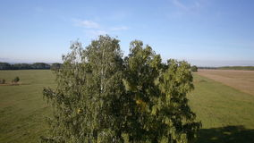 Aerial: flight over beautiful green tree at golden summer field. Morning near sea. Flying over the tree stock video footage