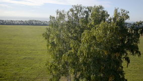 Aerial: flight over beautiful green tree at golden stock video footage