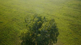 Aerial: flight over beautiful green tree at golden summer field stock video footage