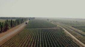 Aerial flight over beautiful vineyard landscape stock footage