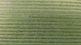 Aerial flight over green apple trees plant field stock footage