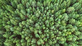 Aerial. Flight over green forest. stock video