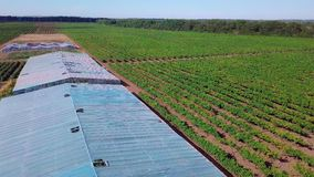 Aerial - flight over the greenhouse in which grapes are grown. Old greenhouses