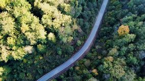 Aerial Flight over the road between green trees. Autumn colors. Motorcycle driving through the forest on the street stock footage