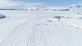 Aerial flight over running penguins. Antarctica.