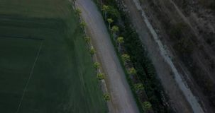 Aerial flight over rural road and grass field at sunset. Aerial drone footage over rural road at sunset with palm trees on the sides, camera moving forward and stock video