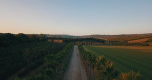 Aerial flight over rural road at sunset. Aerial drone footage over rural road at sunset with palm trees on the sides, camera moving forward stock footage