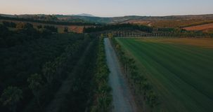Aerial flight over rural road at sunset. Aerial drone footage over rural road at sunset with palm trees on the sides, camera moving right stock video