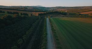 Aerial flight over rural road at sunset. Aerial drone footage over rural road at sunset with palm trees on the sides, camera moving up stock footage
