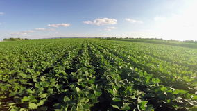 Aerial flight over soy plant field stock footage
