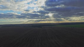 AERIAL: Flight over the wheat field in sunset stock video