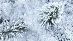 Aerial flight over the winter snowy fir forest. Top view smooth flight from head to top, drone camera movement stock footage
