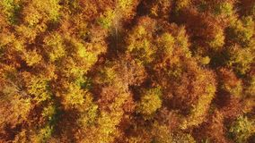AERIAL: Flying above colorful forest treetops a autumn day. AERIAL: Flying above the stunning colorful forest treetops with leaves in yellow, orange and red a stock video