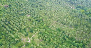 Aerial Flying above Palm Tree Plantation stock video footage