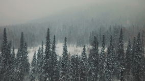 AERIAL: Flying over the snowy forest stock footage