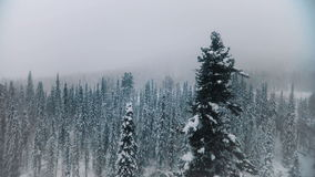 AERIAL: Flying over the snowy forest stock video